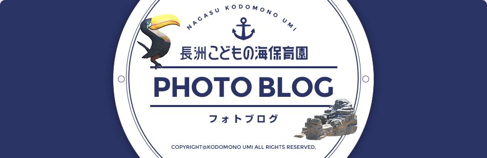 長洲こどもの海保育園 フォトブログ